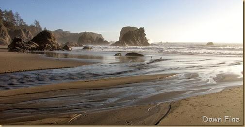Harris Beach_281