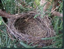 empty nest517