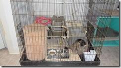 Sadies-cage-2