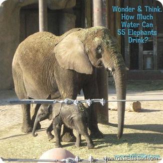 elephants baby_1