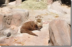 San Diego Zoo 5