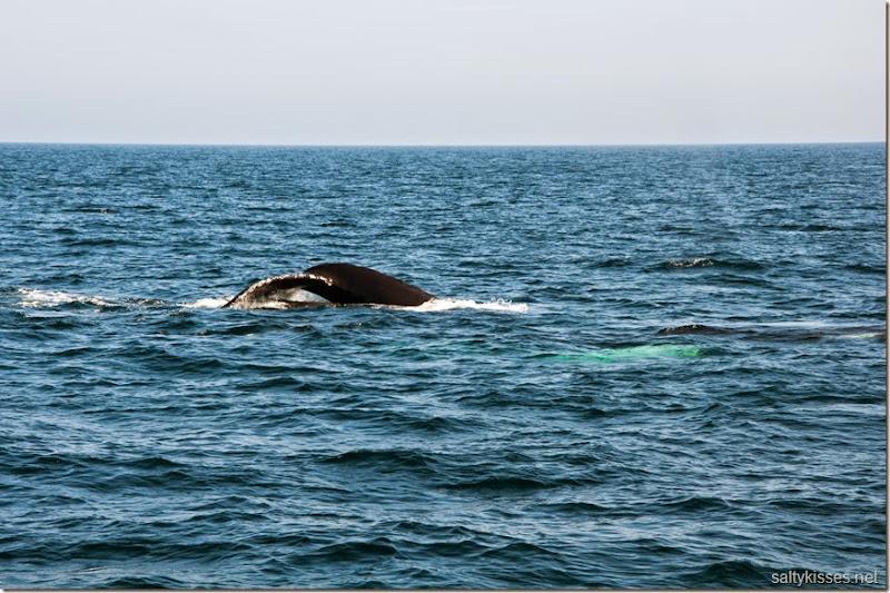 whale8