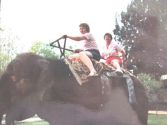 elephant ride 1987 Cypress Gardens