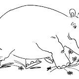 hipopotamo_7.jpg