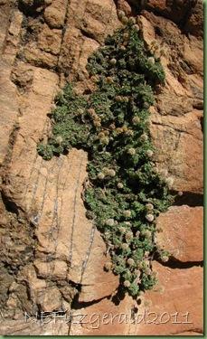 IMG_9416OpalizedSilicaFilling FracturesInNavajo Sandstone