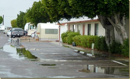 2011-12-13 - AZ, Yuma - Cactus Gardens - Record Rainfall (3)