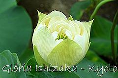Glória Ishizaka - Flor de Lótus -  Kyoto Botanical Garden 2012 - 1