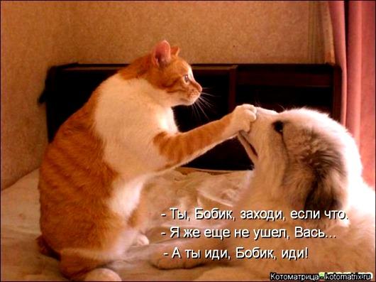 1395372367_kotomatritsa_ls