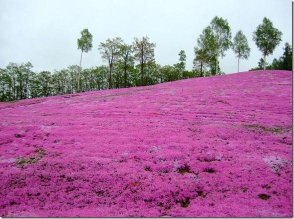 pink-park-japan-20