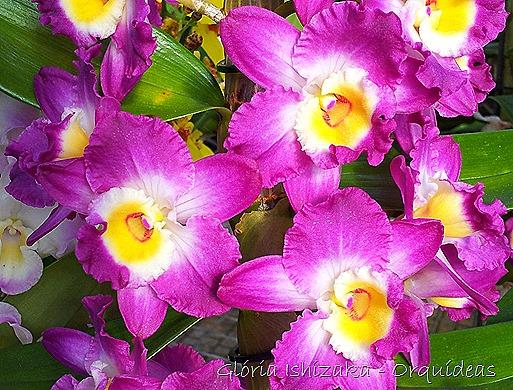 Glória Ishizaka - orquideas 15
