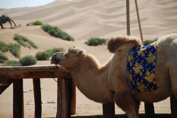 Dunes - Mon chameau