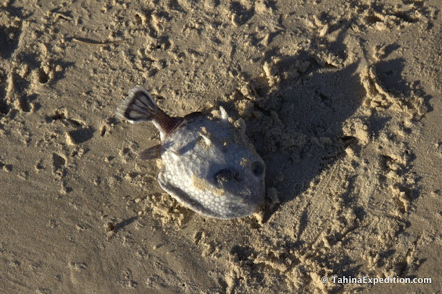 Dead fish in the sand
