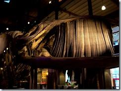 2011.11.14-040 baleine