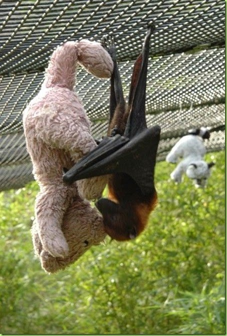 a bat with his teddy bear