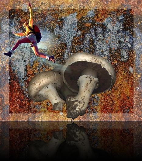 pulando cogumelos (Large)