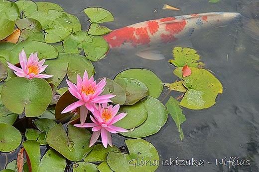 Glória Ishizaka - flores 83