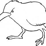 kiwi-5.jpg
