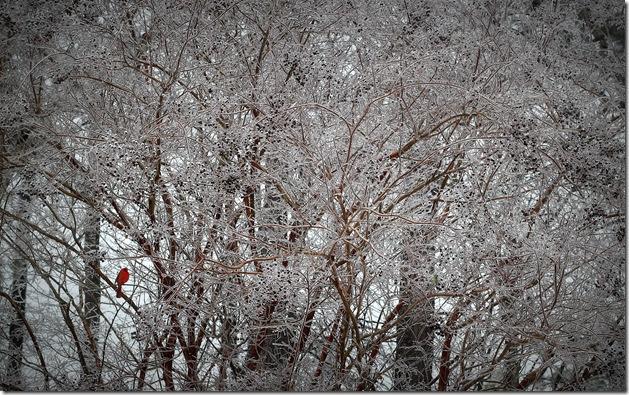IceStorm2014 032