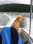 Many dogs enjoy entertaining on their yachts in the summer months.  Doggie life preservers are worthwhile to assure your fur kid's safety.