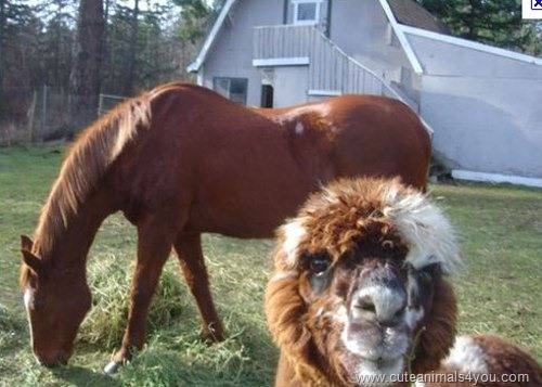 50_Funniest_Animal_Photobombs_Of_All_Time_03