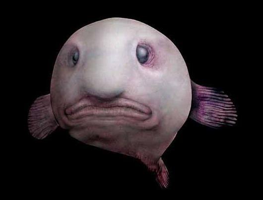 ryba-kaplja13