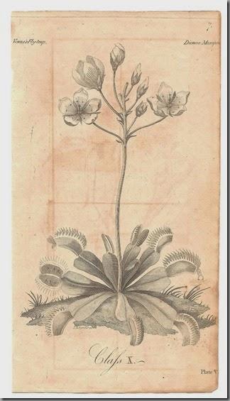 Botanical scan (5)
