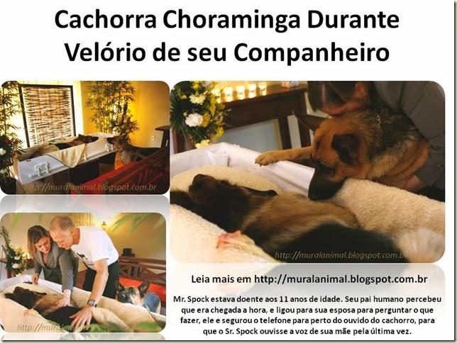 Cachorra Choraminga Durante