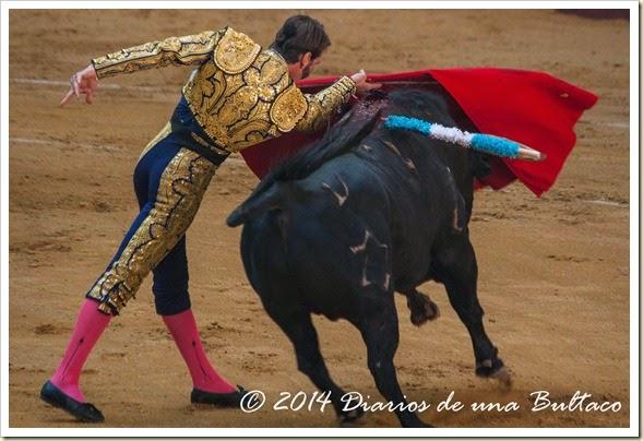 Toros 2014 (1)-10