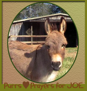 PRAYERS for JOE the Donkey