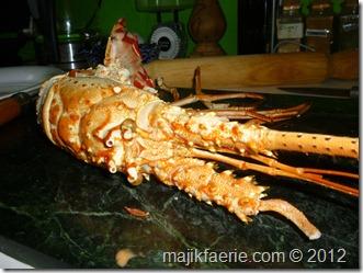 82 lobster