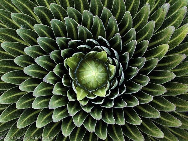 natureze-nature-padrao-pattern-desbaratinando (34)