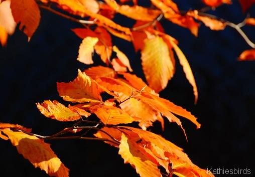 9. autumn gold-kab