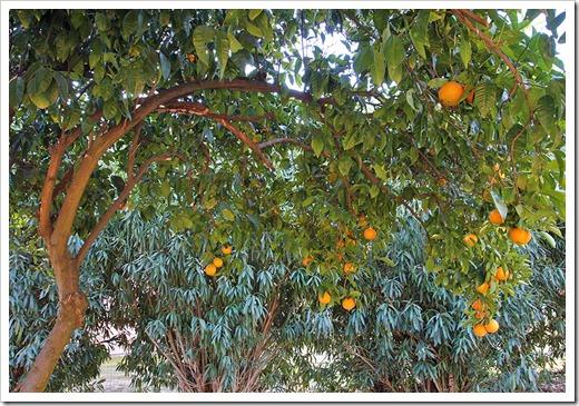 120103_orange_02