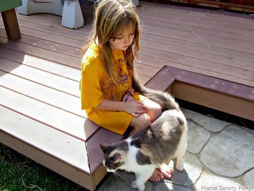 Cat-visitor