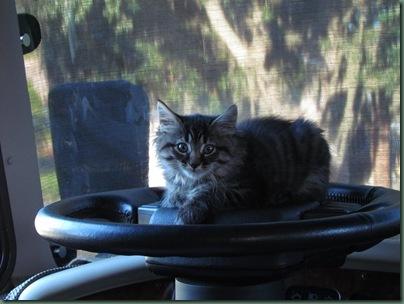 Baxter on steering wheel