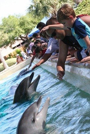 Sea World 195