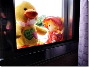 19-365 - We like windows