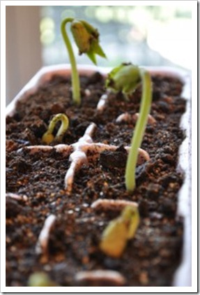 earth egg carton seeds