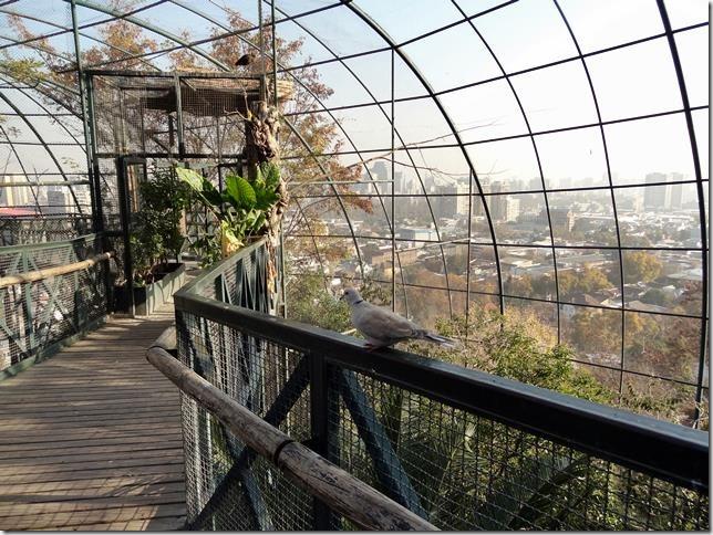 Santiago_Zoo_DSC03730