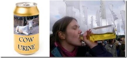 minuman tin air kencing lembu