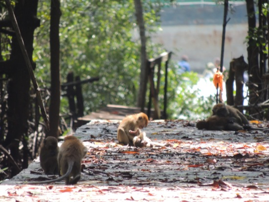 Monkeys playing in the sun...