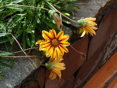 Flori Madeira