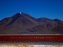 Flamingoes at 4300m on Laguna Colorada, Southwestern Bolivia.