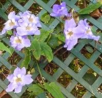 ten47 flowers