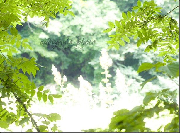D700_2012-07-17_072