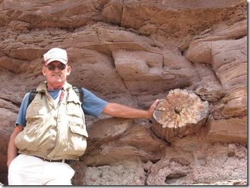2012-04-15 Petrified Wood, Fry Canyon, UT (69)