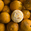 281 Day 2 Oranges.jpg