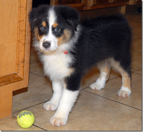jack tennis ball