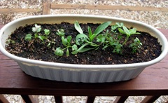Herbs 6-24