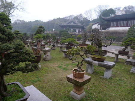 Obiective turistice Suzhou: Gradina de Bonsai